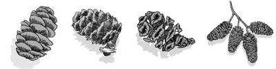 Four-cones